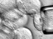 Investigación células madre embrionarias