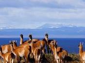 Tierra fuego último rincón patagonia