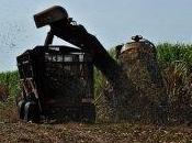 Primeras cooperativas agropecuarias Cuba comienzan semana
