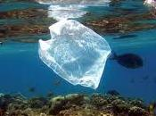 Pucón primera ciudad prohíbe bolsas plásticas comercio