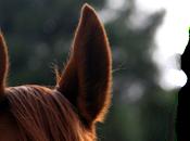 tenemos orejas casualidad