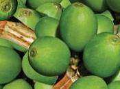 Cómo bajar peso extracto grano café verde