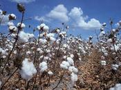 Algodón telas algodón /cotton cotton fabrics