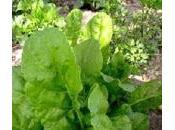Cómo sembrar semillas espinaca huerto