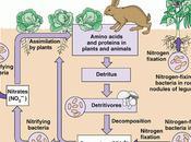 ciclo fósforo