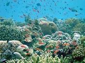 Biodiversidad marina maravilloso video