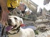 Perros Salvamento Haití
