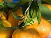 Frutas Verduras temporada: ENERO FEBRERO