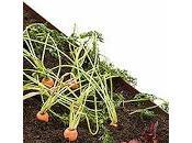 mesa cultivo solución ideal para cultivar casa