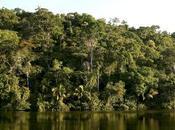 beneficios Amazonas