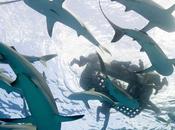 torpedos provocaron peor ataque tiburones historia