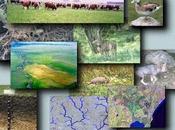 economía verde ayudaría reconocer verdadero valor bosques