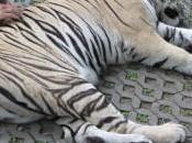 turismo responsable animales