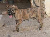 Urgente adopción para estos preciosos cachorros. (granada)