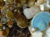 Plancton: cápsula tiempo para investigación científica
