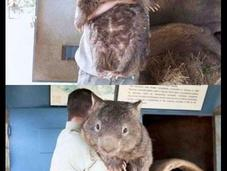 Patrick, ratón grande mundo