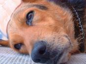Epilepsia perros tratada Acupuntura
