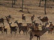 Berrea Ciervos, buen reclamo para descubrir Naturaleza Extremadura