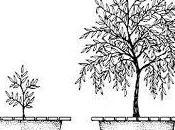 Como ganan peso plantas, agua, aire tierra