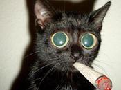 Nicolas cage confiesa haber compartido setas alucinógenas gato lewis