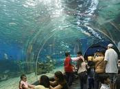 Underwater world: acuario Singapur