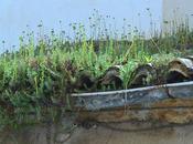 Cubiertas vegetales espontáneas. proezas plantas suculentas.