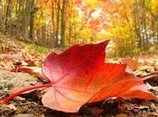 llega otoño