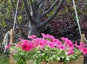 Jardineras Madera: Elegantes Durables
