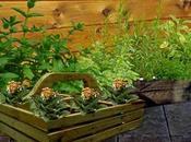 Porqué Elegir Jardineras Madera Para Cultivar
