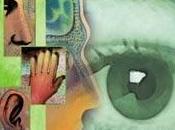 Neuromarketing Sensorial
