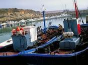 Noticia: Carlos Domínguez destaca importancia España como principal mercado pescado blanco participación abastecimiento comunitario
