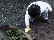 Cultivar Verduras Hierbas Jardineras Madera