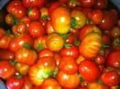Salsa Tomate conserva