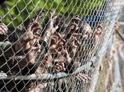 Crítica Walking Dead caminantes único peligro