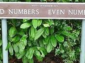 ¿Son números pares realmente mitad naturales?