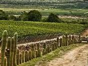 Cómo perciben vino argentino principales mercados mundo?