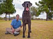 Muere perro grande mundo: George Gigante.