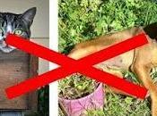 Cómo Hacer Repelentes Caseros Para Perros Gatos