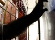 pantallas táctiles relaja primates