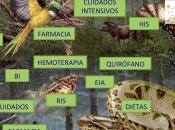 ecosistema CCOW