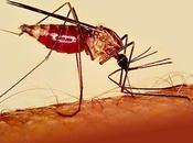 Paludismo incrementa debido mutación
