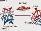 Formación sangre vasos sanguíeos