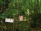 Bosque Aokigahara, Japón.