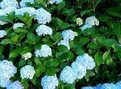 este jardín invierno, también flores verano.