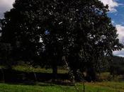 Ruta molinos (concejo iIlas) 100% senderismo rural
