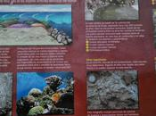 fósiles asturias (Aviles alrededores)