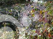 Bichos venenosos (II): arañas, garrapatas serpientes
