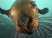 leyes protección fundamentales para vida marina