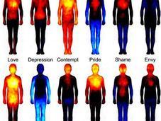 Estudio muestra partes cuerpo humano impactan distintas emociones