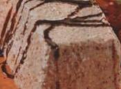 Castañas molde